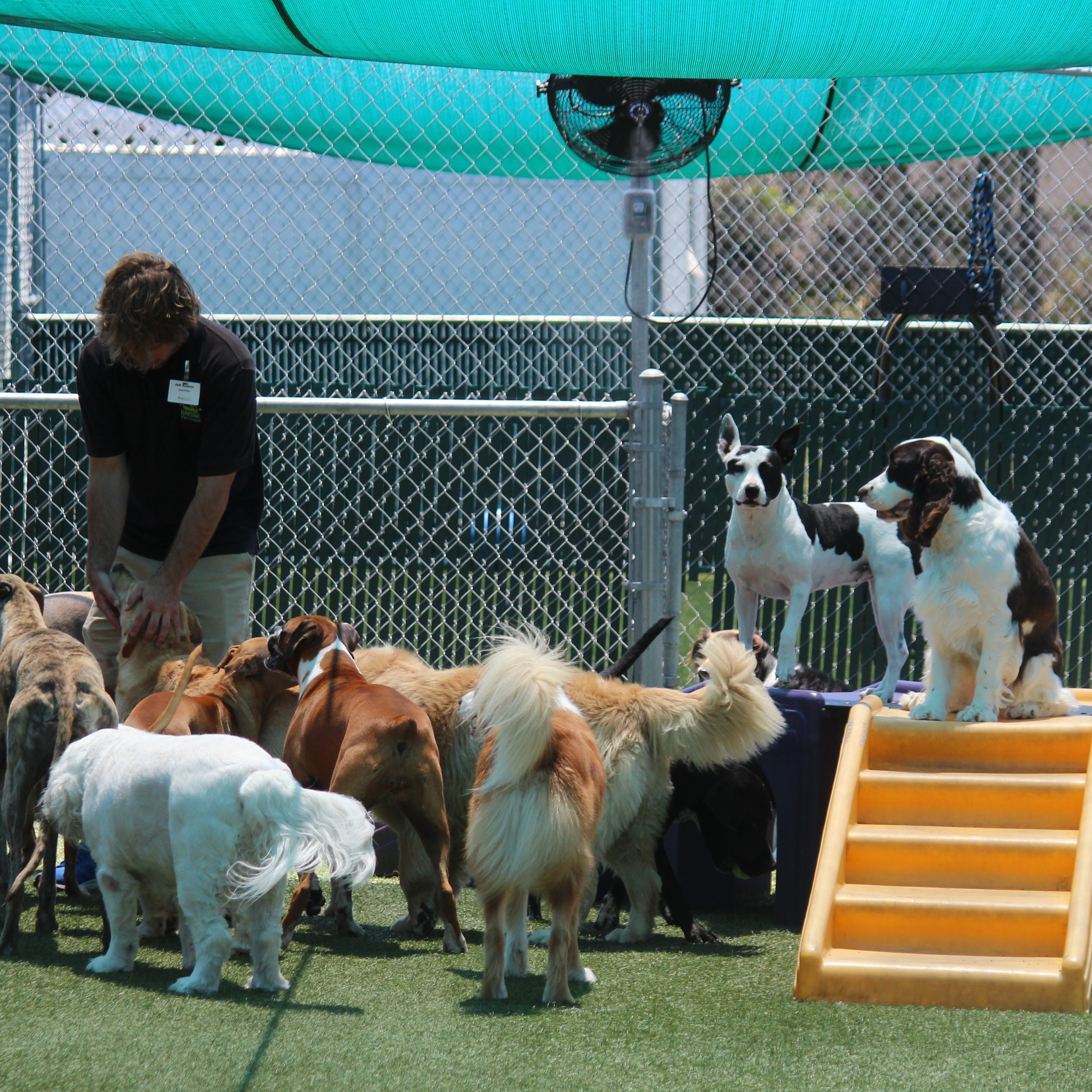 Outdoor large doggie daycare at Bayside Pet Resort