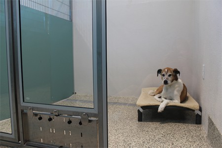 Queen Palm Dog Boarding suite at Bayside Pet Resort of Osprey