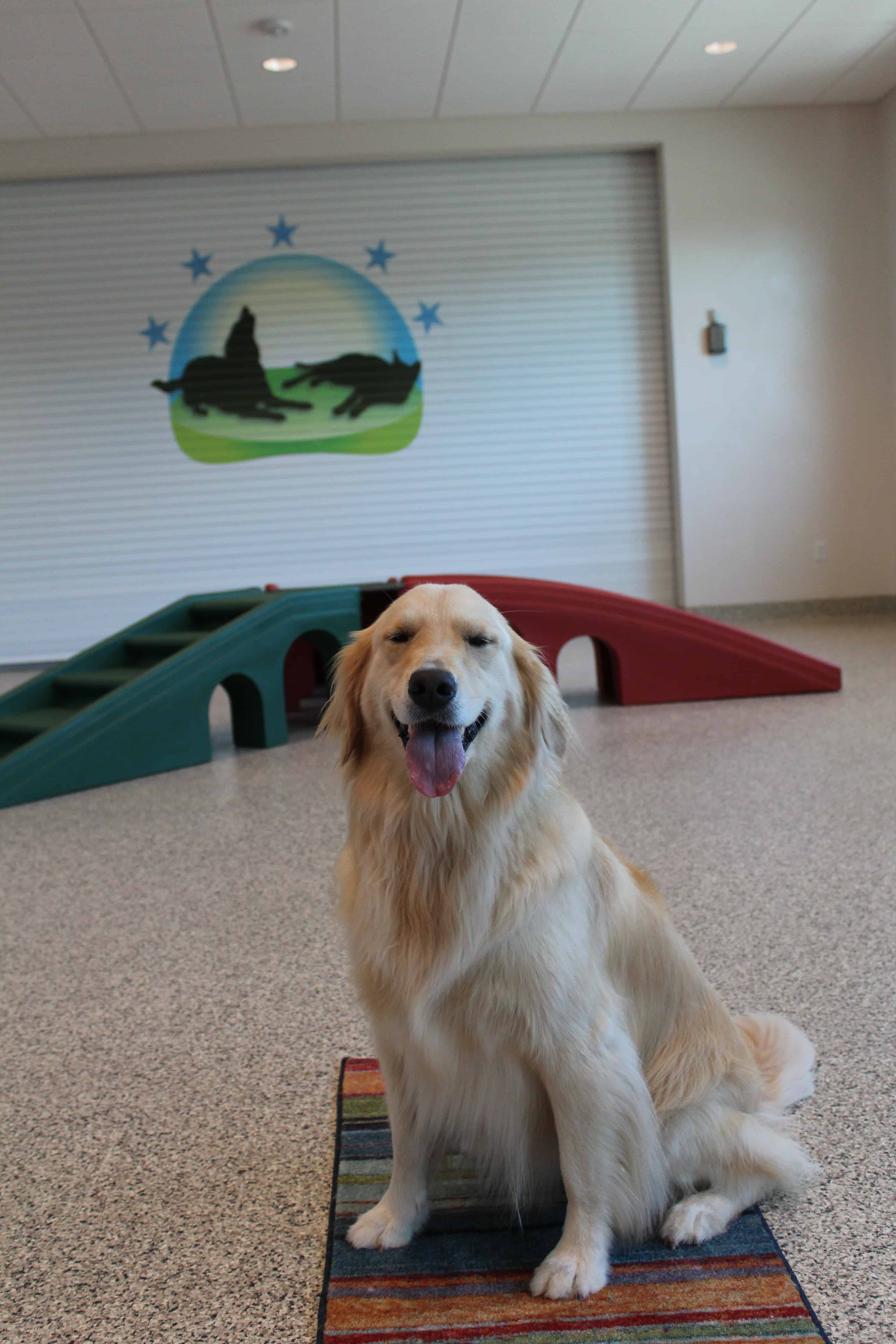 Golden Retriever at Bayside Pet Resort in Osprey, FL