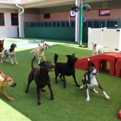 Dog day care service in London