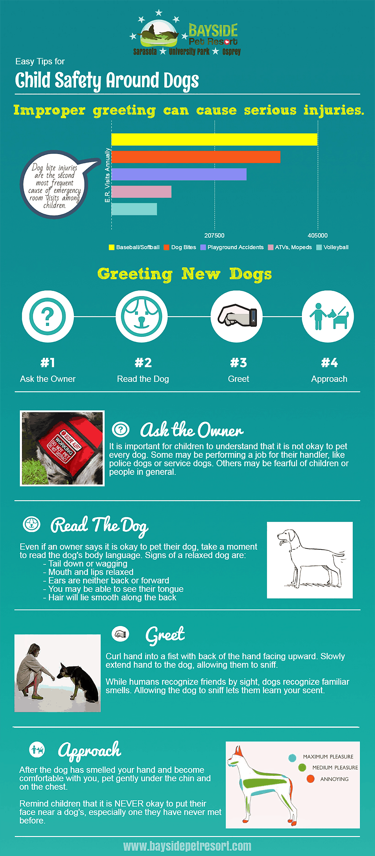 dog bite infogram bayside pet resort