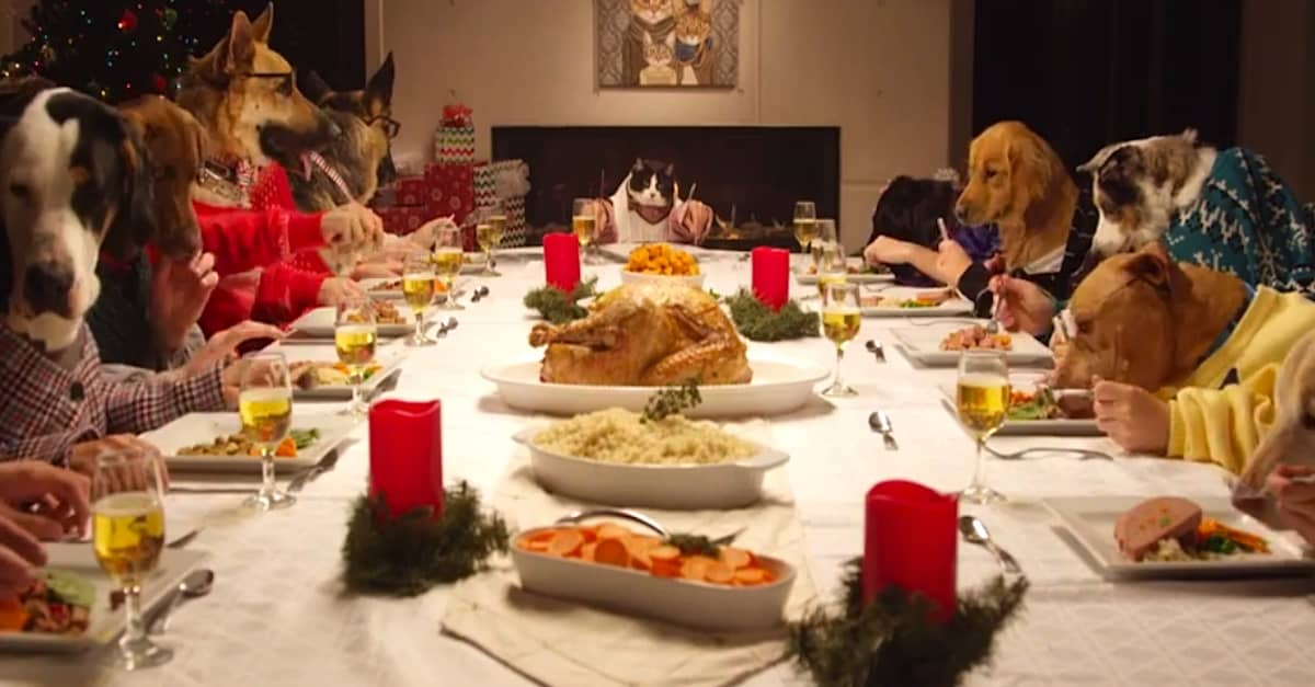 Watch This: Cats And Dogs Love Their Christmas Dinner ... |Christmas Vacation Dog Dinner