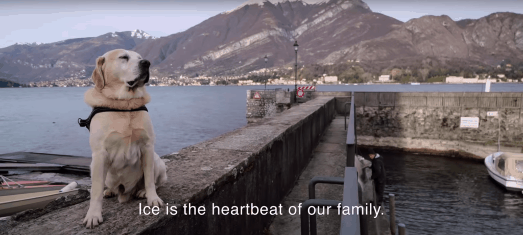 yellow lab sitting by the sea netflix documentary dogs