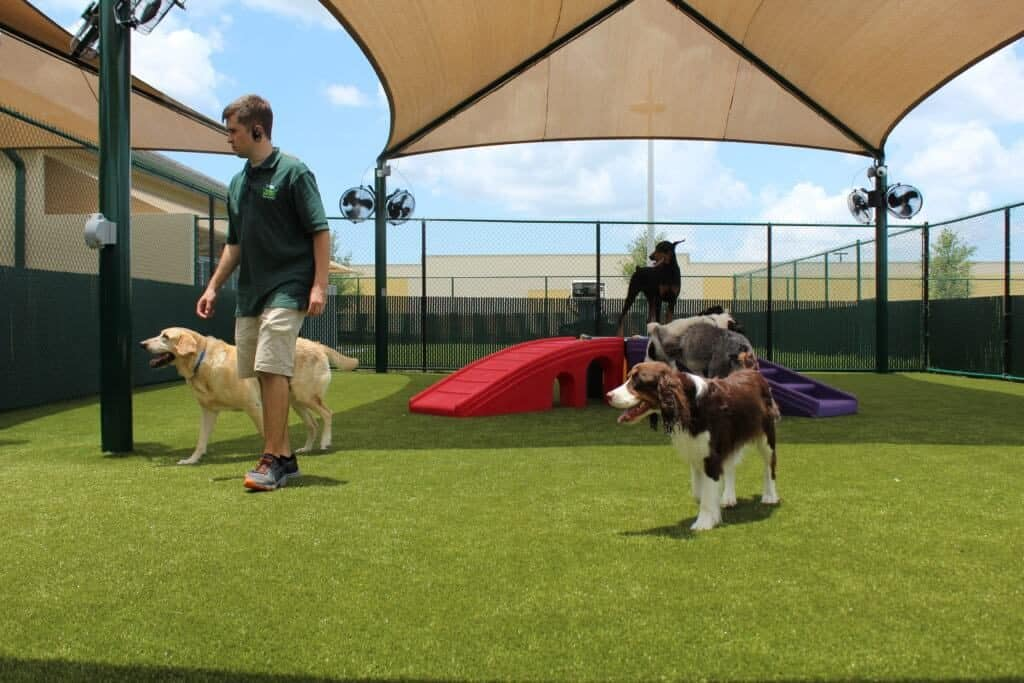 bayside pet resort at lakewood ranch doggie daycare attendent with dogs