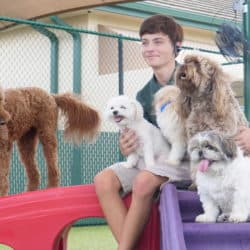 doggie daycare lakewood ranch at bayside pet resort